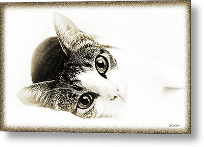Grand Kitty Cuteness 3 High Key Metal Print by Andee Design