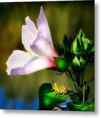 Grasshopper And Flower Metal Print by Mark Andrew Thomas