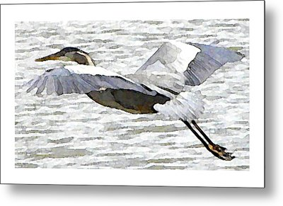 Great Blue Flight Metal Print by John Goyer