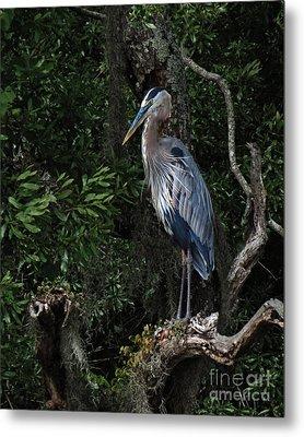 Great Blue Heron  Metal Print by Deborah Smith