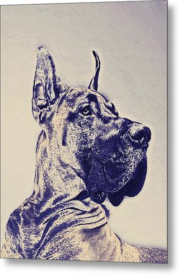 Great Dane- Blue Sketch Metal Print by Jane Schnetlage
