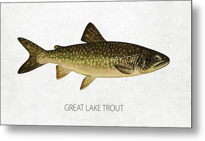 Great Lake Trout Metal Print by Aged Pixel
