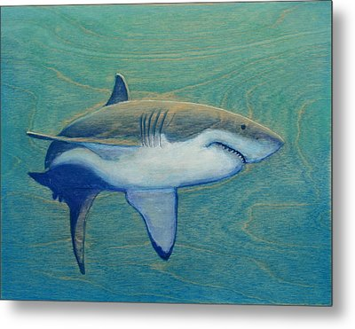 Great White Metal Print by Nathan Ledyard