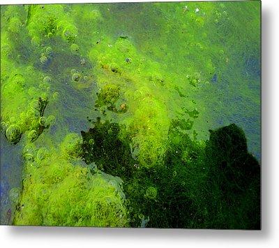 Green Algae Metal Print by Salman Ravish