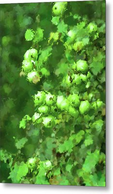 Green Apple On A Branch Metal Print by Toppart Sweden