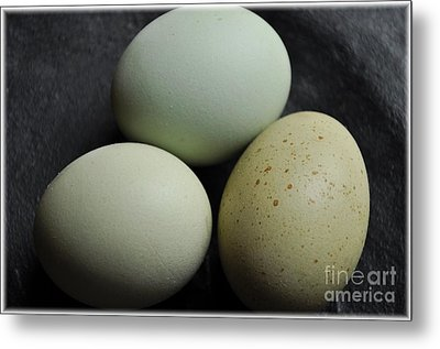 Green Eggs Metal Print by Cheryl Baxter