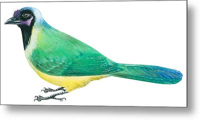 Green Jay Metal Print by Anonymous