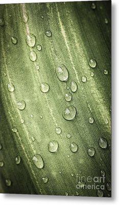 Green Leaf With Raindrops Metal Print by Elena Elisseeva