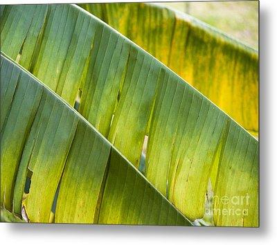 Green Leaves Series 14 Metal Print by Heiko Koehrer-Wagner