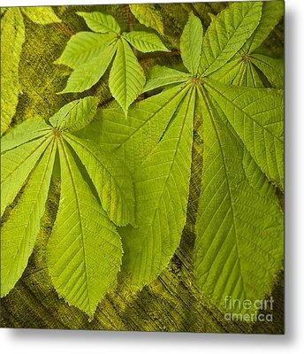Green Leaves Series Metal Print by Heiko Koehrer-Wagner