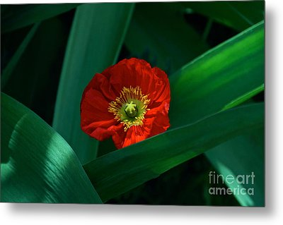 Green Loves Red Loves Green Metal Print by Byron Varvarigos