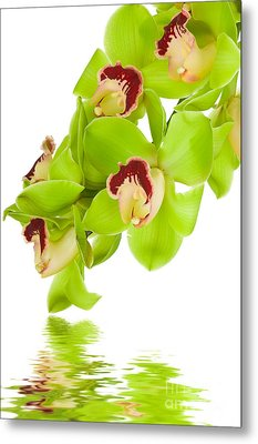Green Orchid Metal Print by Boon Mee