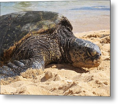 Green Sea Turtle 2 - Kauai Metal Print by Shane Kelly