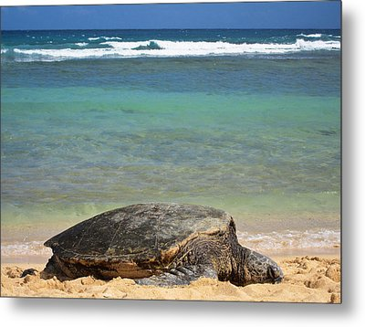 Green Sea Turtle - Kauai Metal Print by Shane Kelly