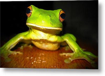 Green Tree Frog Metal Print by Laura Hiesinger