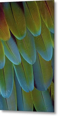 Green-winged Macaw Wing Feathers Metal Print by Darrell Gulin