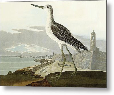 Greenshank Metal Print by John James Audubon