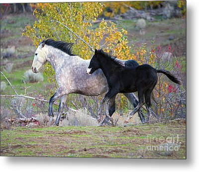 Grey And White Metal Print by Mike Dawson