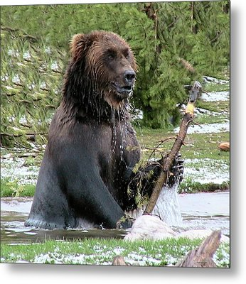 Grizzly Bear 6 Metal Print by Thomas Woolworth