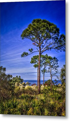 Gulf Pines Metal Print by Marvin Spates