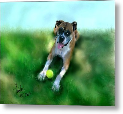 Gus The Rescue Dog Metal Print by Colleen Taylor