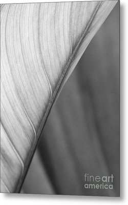 Half And Half Metal Print by Sabrina L Ryan