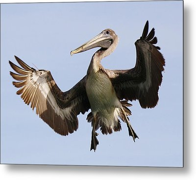 Hang Time Metal Print by Paulette Thomas