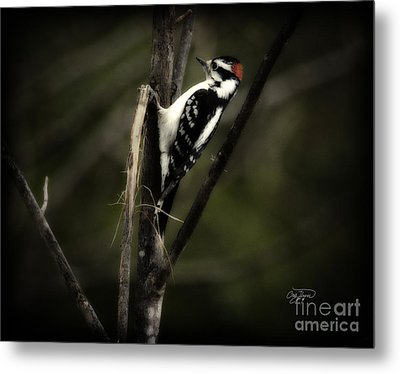 Hanging Out Metal Print by Cris Hayes