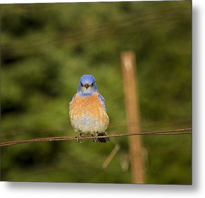 Hanging Out Metal Print by Jean Noren