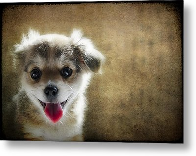 Happiness Is A Little Puppy Metal Print by Lisa Knechtel