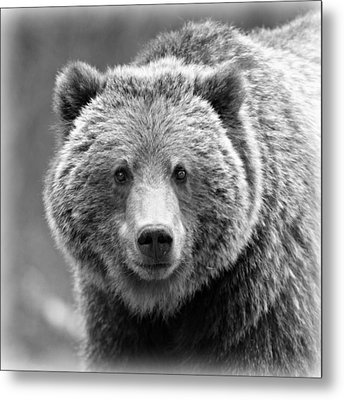 Happy Bear Metal Print by Stephen Stookey