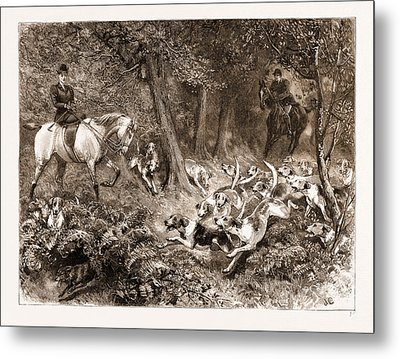Hard Pressed A Woodland Scene Metal Print by Litz Collection
