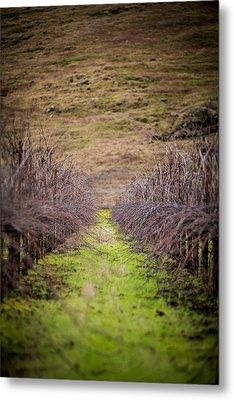 Harvested Vines Metal Print by Mike Lee