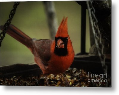 Having A Snack Metal Print by Amanda Collins