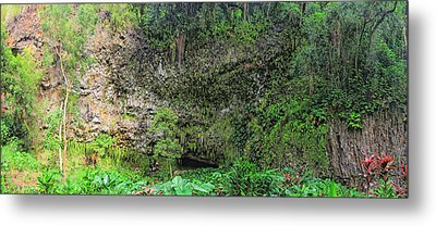 Hawaii Fern Grotto Metal Print by C H Apperson