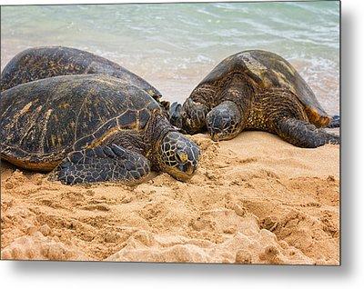 Hawaiian Green Sea Turtles 1 - Oahu Hawaii Metal Print by Brian Harig
