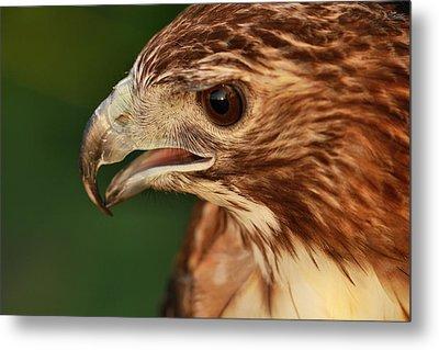 Hawk Eyes Metal Print by Dan Sproul