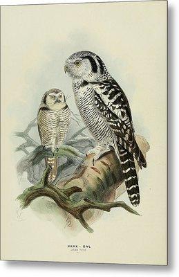 Hawk Owl Metal Print by J G Keulemans
