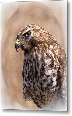 Hawk - Sphere - Bird Metal Print by Travis Truelove