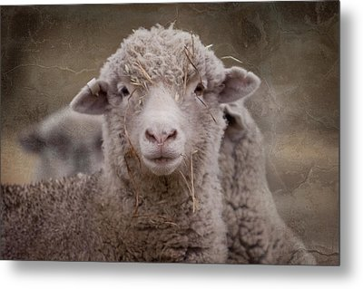 Hay Ewe Metal Print by Michelle Wrighton