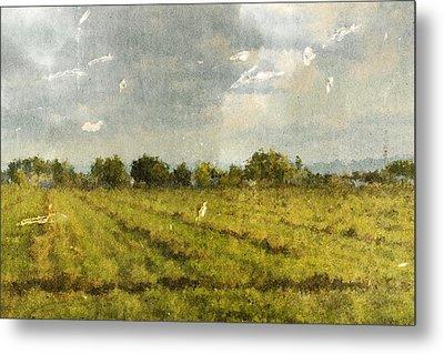 Hay Fields In September Metal Print by Brett Pfister