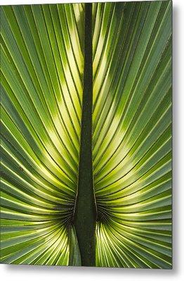 Heart Of Palm Metal Print by Roger Leege
