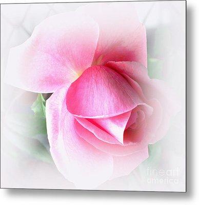 Heartfelt Pink Rose Metal Print by Judy Palkimas