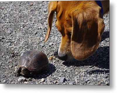 Hello There Metal Print by Tannis  Baldwin