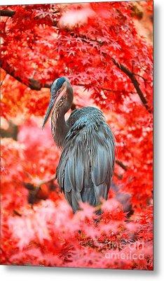 Heron Wonderland Metal Print by Douglas Barnard