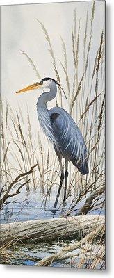 Herons Natural World Metal Print by James Williamson