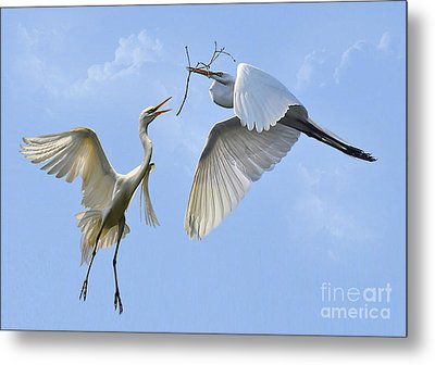 Hey...go Find Your Own Stick Metal Print by Kathy Baccari