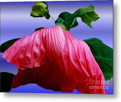 Hibiscus Bloom Wilted Metal Print by ImagesAsArt Photos And Graphics
