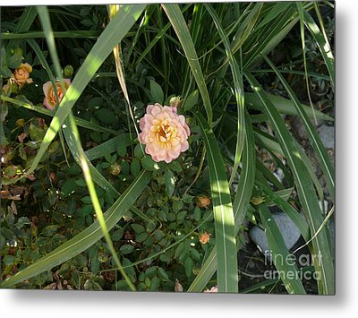 Hidden Perfection Metal Print by Jacquelyn Roberts