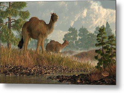 High Arctic Camel Metal Print by Daniel Eskridge